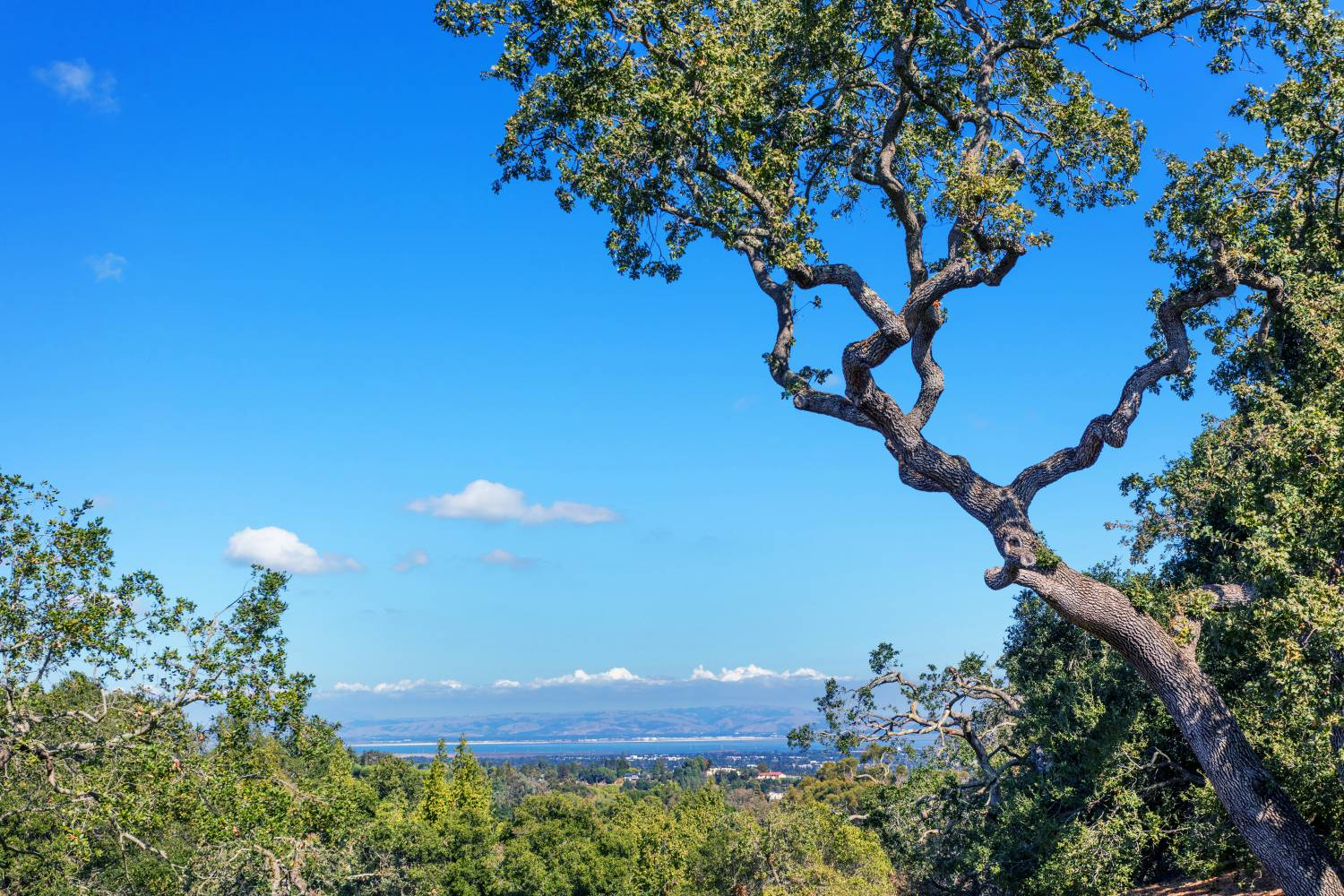 Beautiful sky view with Tree, Los Altos Hills